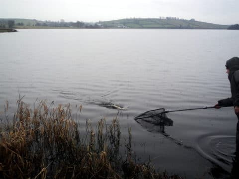 A Pike Comes to the Net at Sundays Pike Rigs R Us Competition