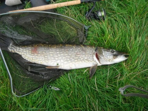 Another pike of similar size soon followed