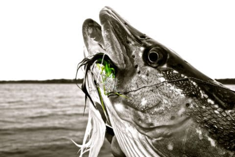 Irish Pike Fishing is Never Black and White