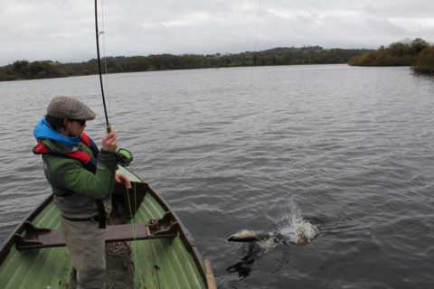 Even Small Well Conditioned Irish Pike are Strong and Fight Very Hard Indeed