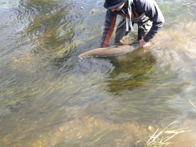 Slaney River - Mossy Browne releases fish