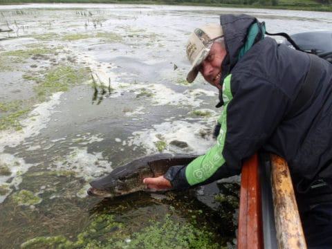 Angling Guide Peadar O'Brien Releases A Pike Back to the Water