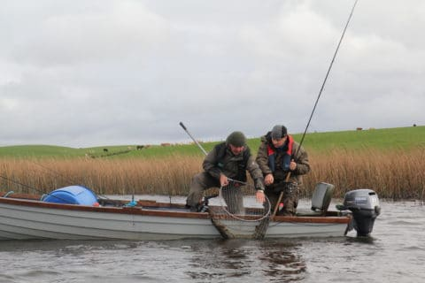 The big pike goes into the net safely