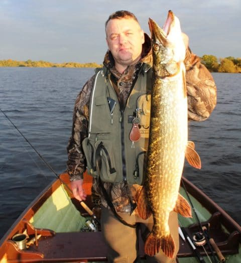 A Well Conditioned Lough Ramor Pike Taken on a Dead Bait Yesterday