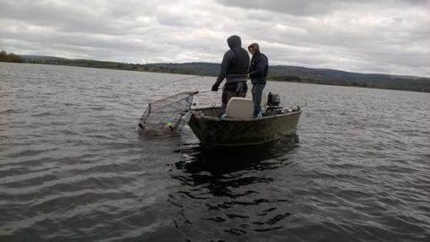 - Anglers landing a pike on Lough Derg last Sunday.