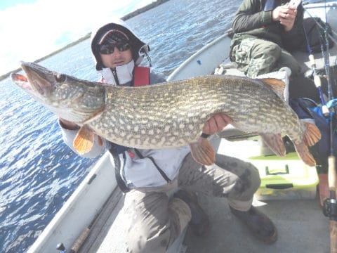 andro Colangeli boated a pike just a few pounds short of the specimen weight.