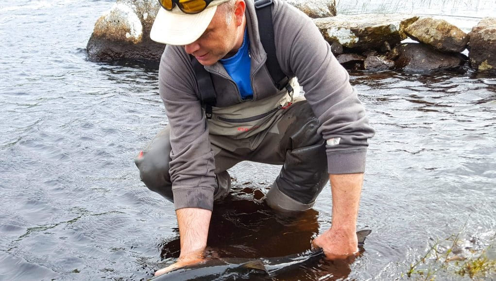 Neil allows the fish to recover before releasing it. It's always good to watch them swim off strongly. #CPRsaveslives