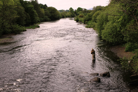 Fly Fishing for Salmon on the Laune