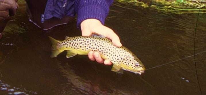 Trout Fishing in Ireland