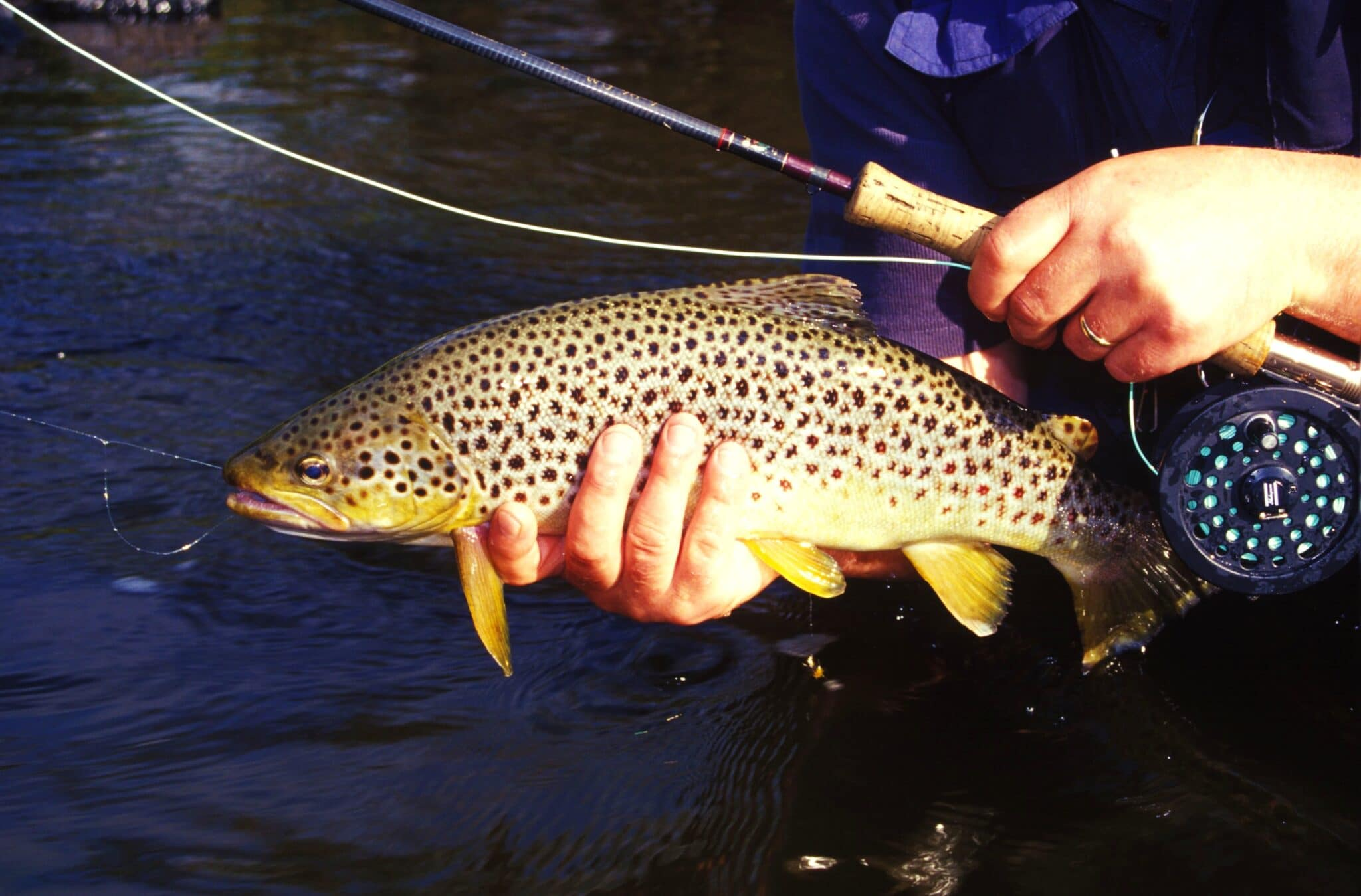 Brown trout fishing Ireland