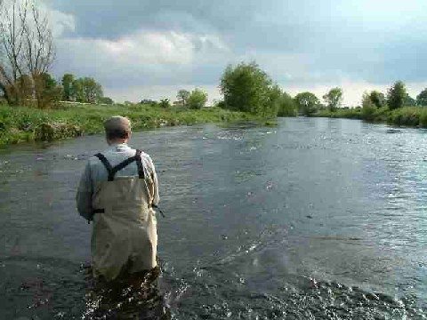 Fly fishing for wild brown trout on the River Liffey, Ireland.