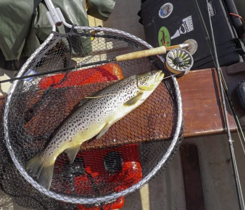 A nice trout from the Lower Corrib, courtesy of Harold O'Toole. #CPRSavesFish