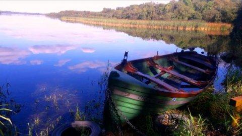 'Resting up' Rusheen, Lough Sheelin