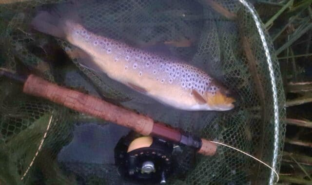Trout were taking well into the late evening