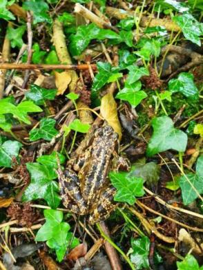 The humble frog - one of the best indicators of a good clean environment