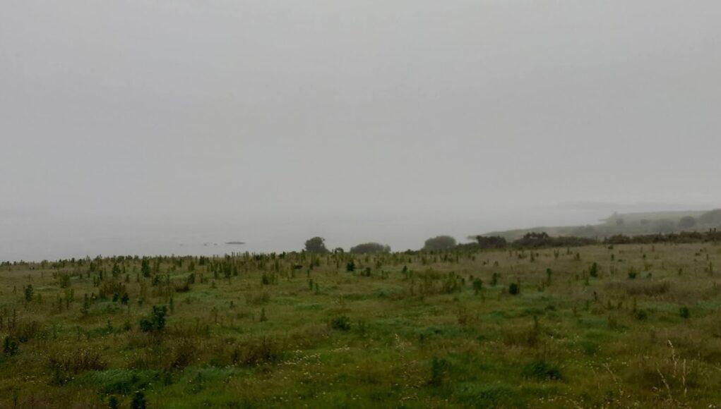 A foggy scene on Lough Currane