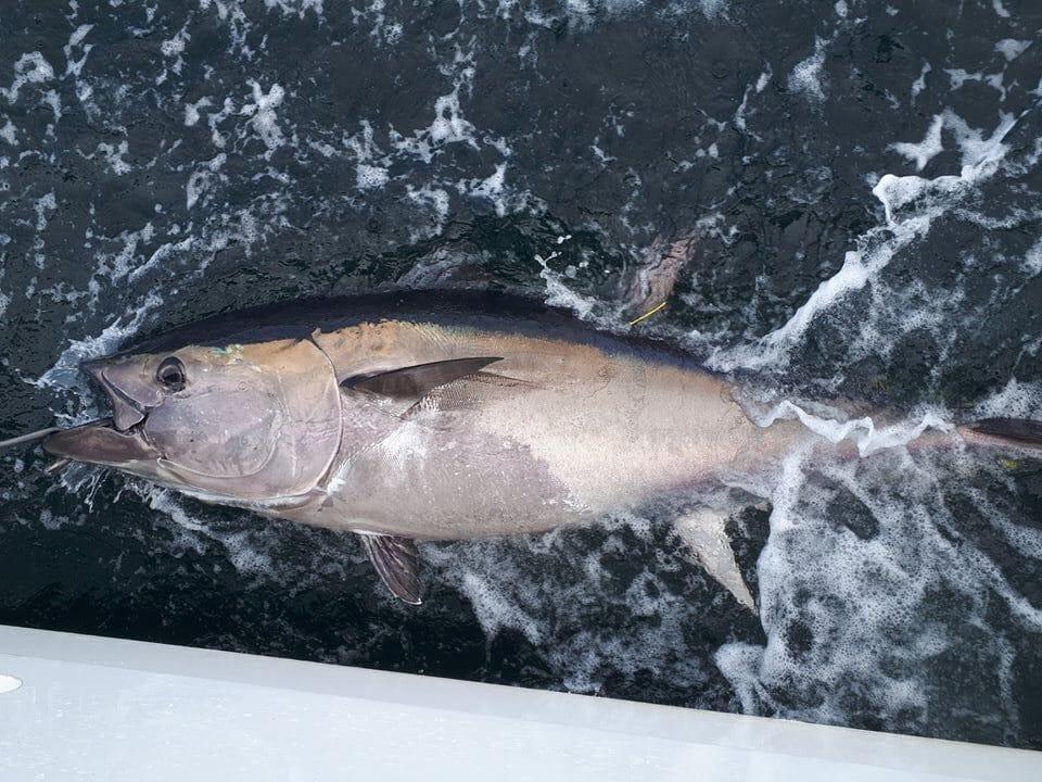 fishinginireland.info