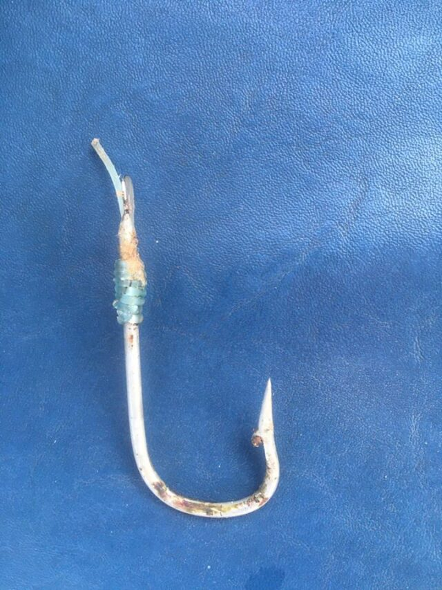 We also manage to rid a blue shark of a commercial longline hook.