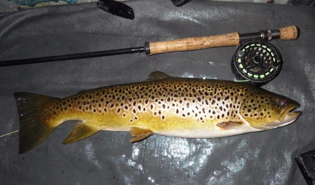 4lbs 10ozs caught using a dry Peter sedge fly, August 2nd