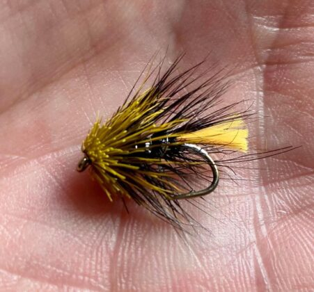 Stevie O'Neill's lunchtime tying
