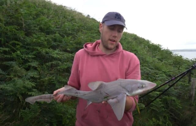 Angler holding a smooth hound fish