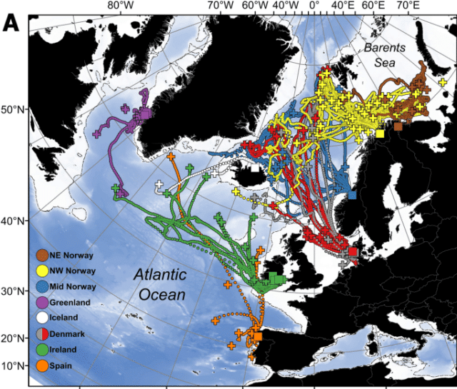 Map from study showing that tagged Irish salmon primarily migrated westward towards East Greenland.