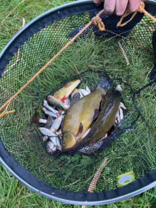 Tench, perch and roach